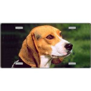 Beagle Dog Pet Novelty License Plates   Full Color Photography License
